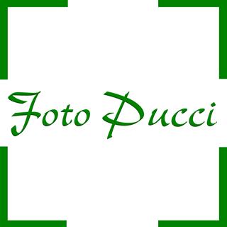 Foto Pucci S.a g.l.