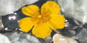 Blüten & Mehr