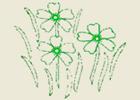 Aux fleurs de Montchoisi