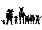 Bild Tierarztpraxis Rohner AG